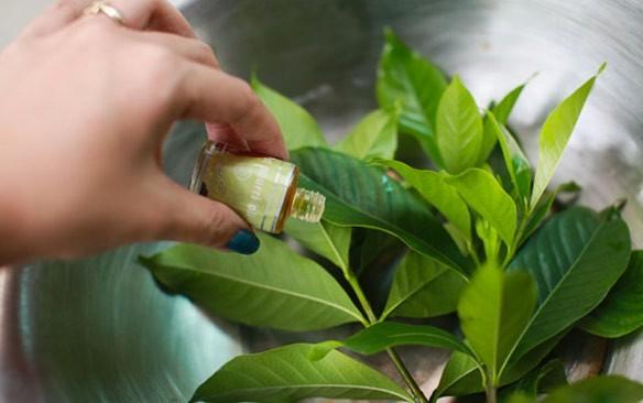 كيفيه التخلص الناموس والحشرات الصيف