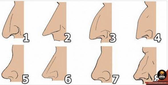 ماذا يقول شكل أنفك عن شخصيتك 11