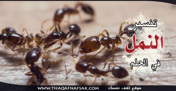تفسير النمل في الحلم