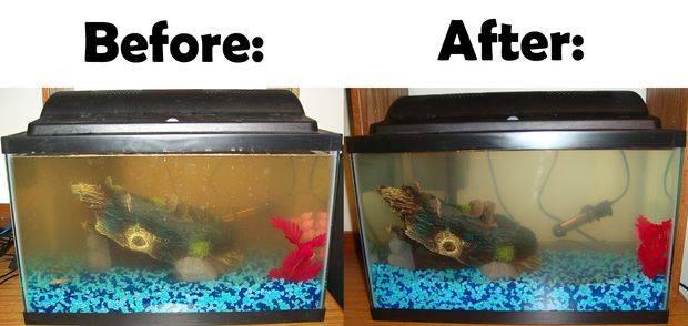 طرق تنظيف حوض السمك بالصور