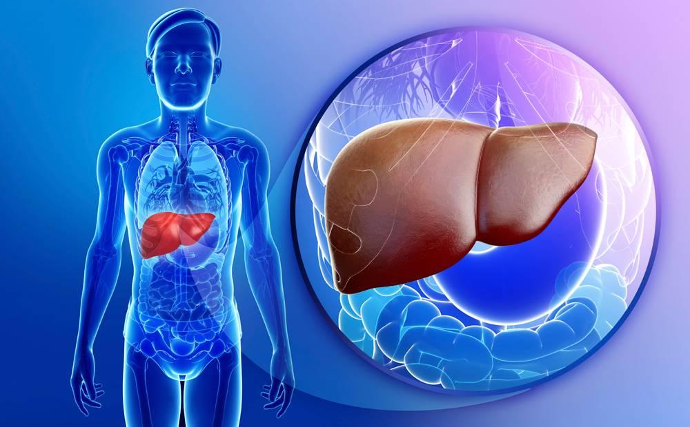 مشاكل الكبد في الجسم أعراض تؤكد وجدوها أحذر منها ثقف نفسك
