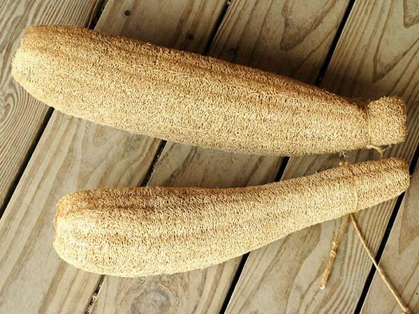 ١٠ منتجات نعتقد إنها صحية ولكنها ضارة !! gourd-luffa.jpg