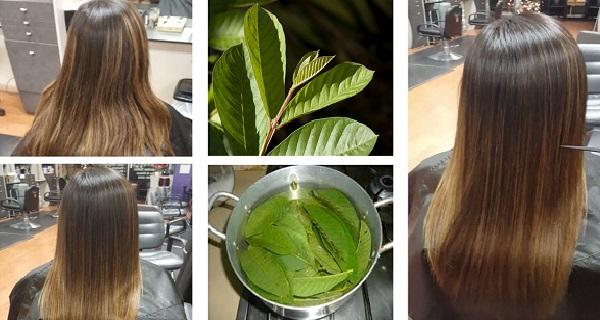 علاج تساقط الشعر بـ أوراق الجوافة