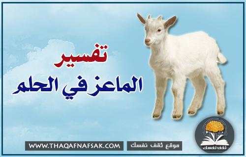 تفسير الماعز في الحلم ثقف نفسك
