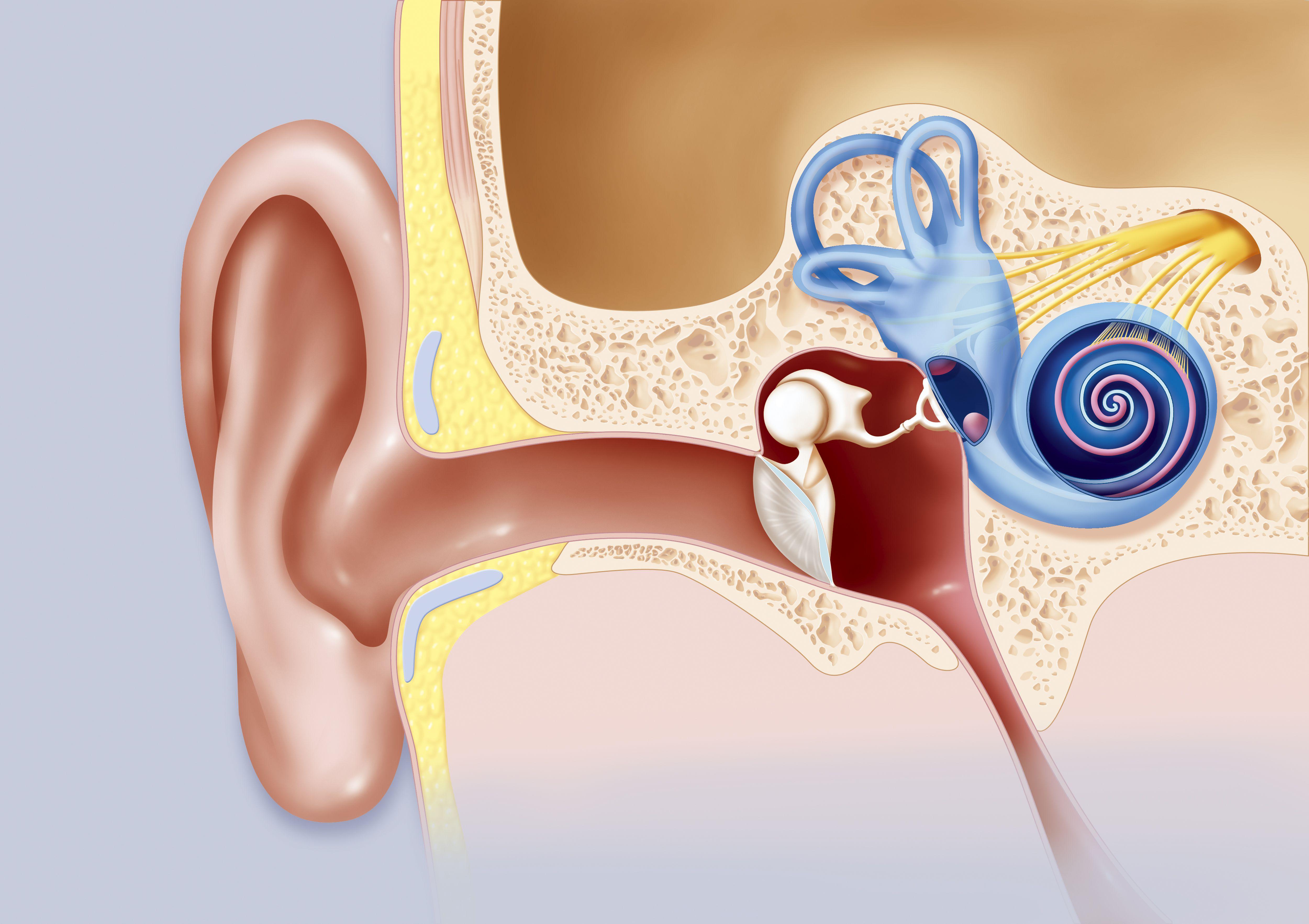 علاج إنسداد الأذن 19 طريقة طبيعية ثقف نفسك