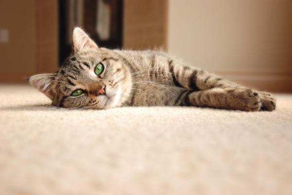 ماذا تعنى حركات القطط المختلفة ثقف نفسك