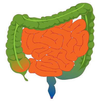علاج القولون العصبي علاج-القول�