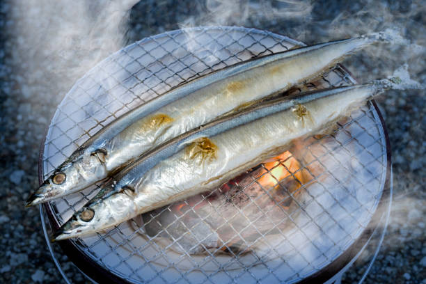 سمك البراكودا