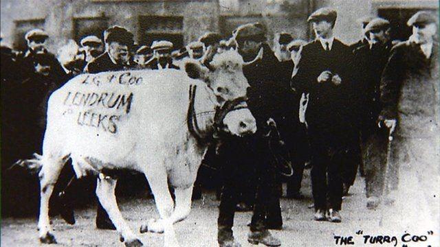 تورا كو  Turra Coo البقرة القائدة