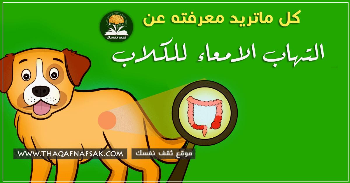 التهاب الامعاء في الكلاب