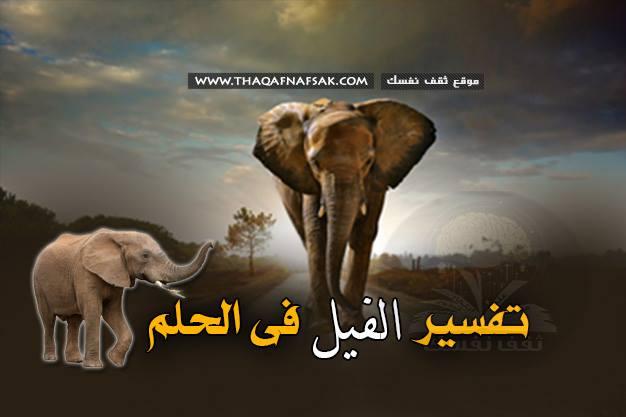 الفيل في الحلم