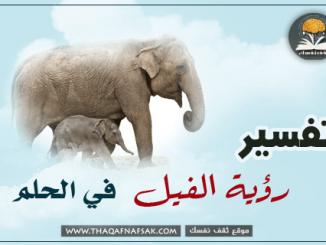 تفسير الفيل في الحلم