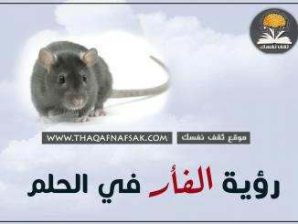تفسير الفأر في الحلم
