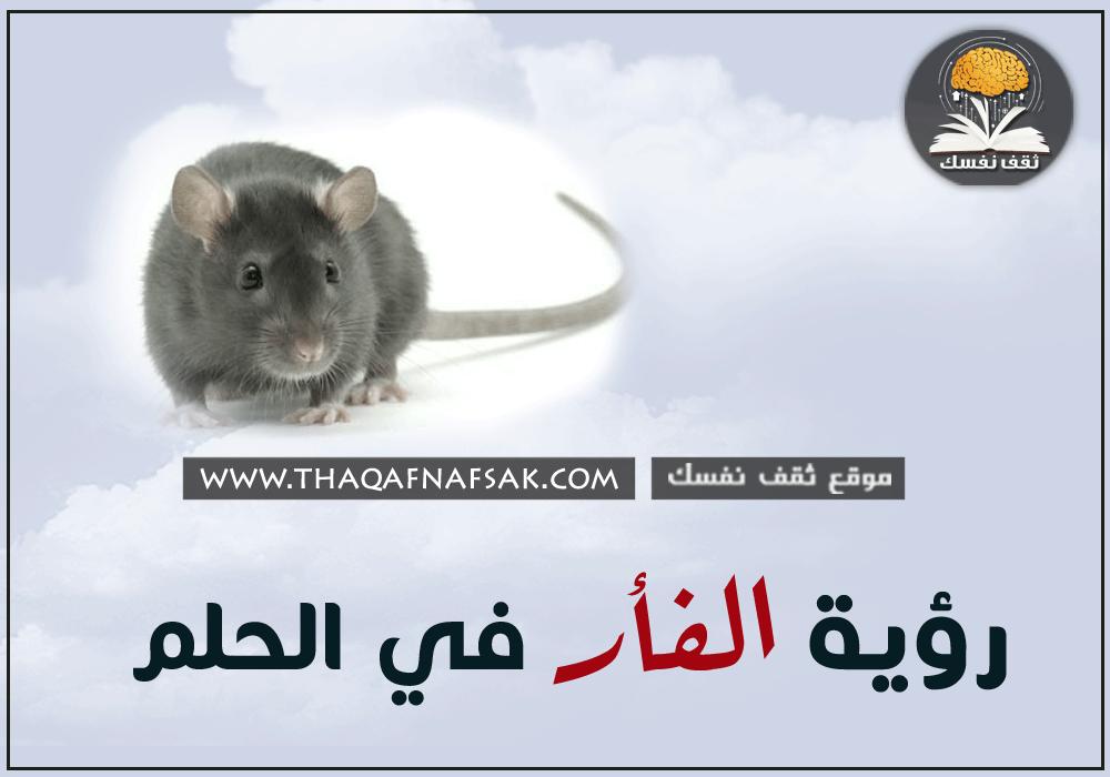 تفسير الفأر في الحلم ثقف نفسك