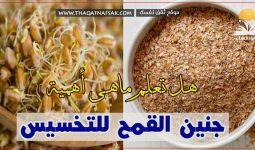 جنين القمح للتخسيس
