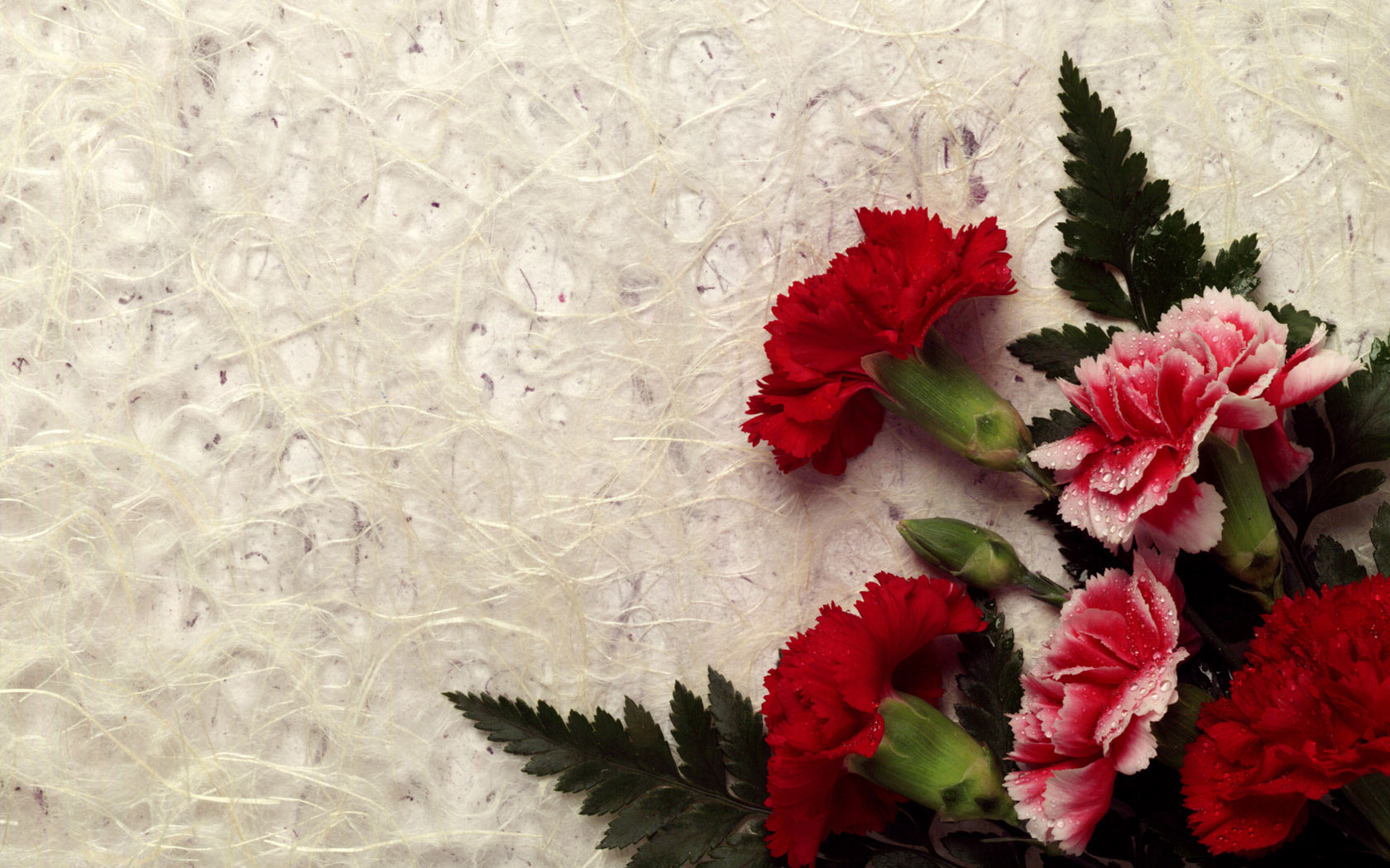 most-beautiful-flower-lovers-hd-wallpaper